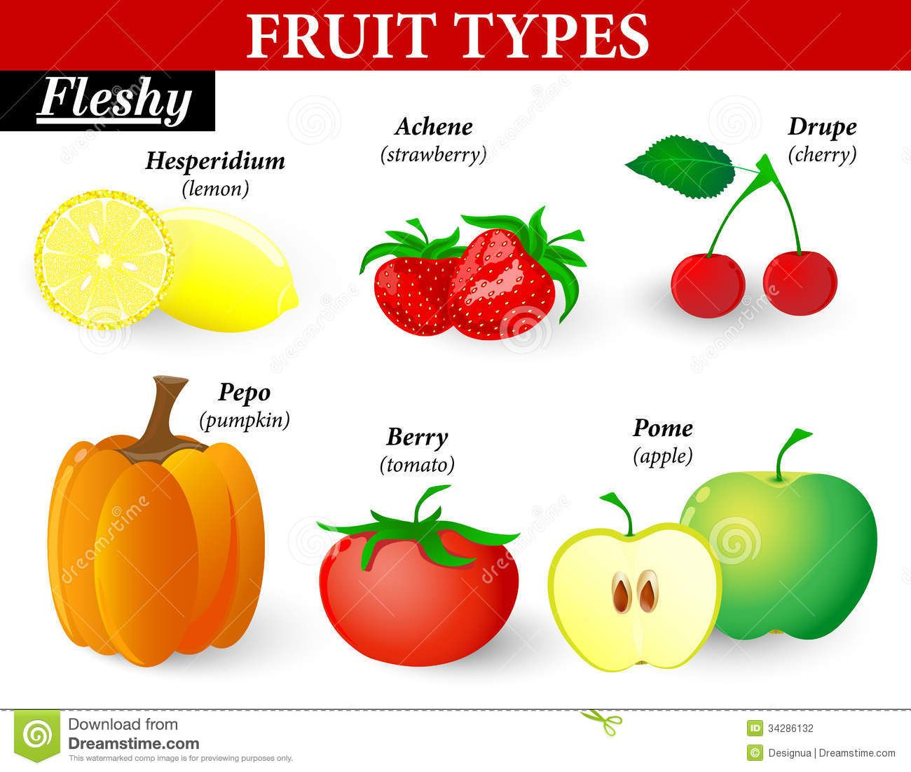 Fleshy Fruit Types Fruits Can Be Subdivided Formed Single