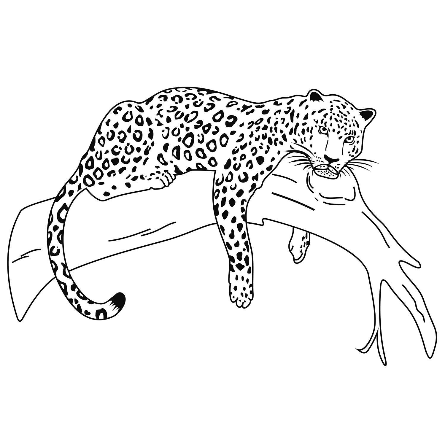 Leopard Wild Cat Graphics Svg Dxf Eps Cdr Ai