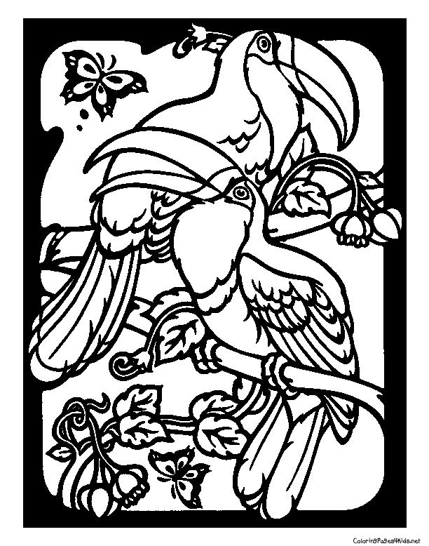 toucans  coloring pages for kids  colouring pages
