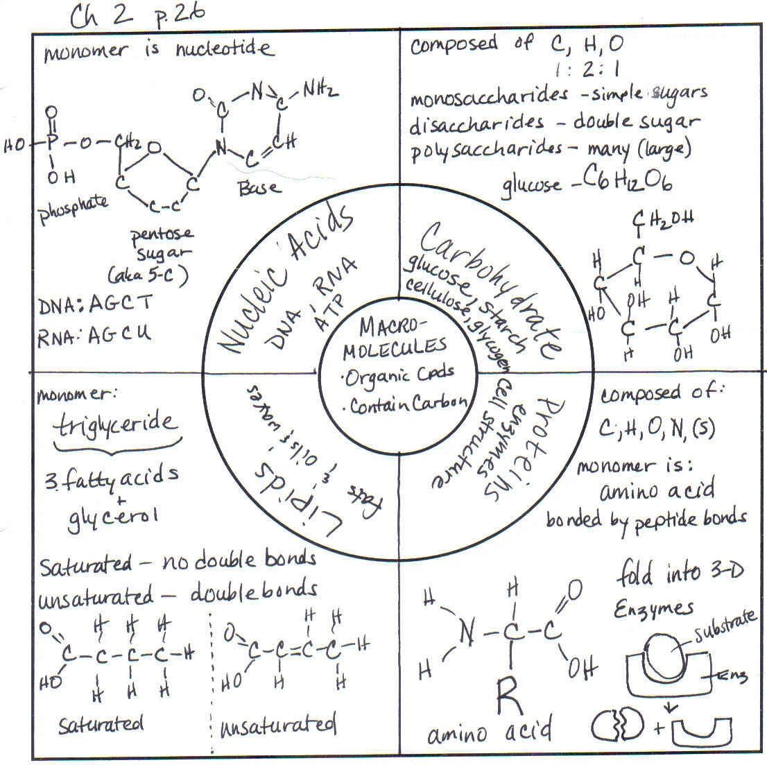 Organic Macromolecules Worksheet Worksheets Ratchasima