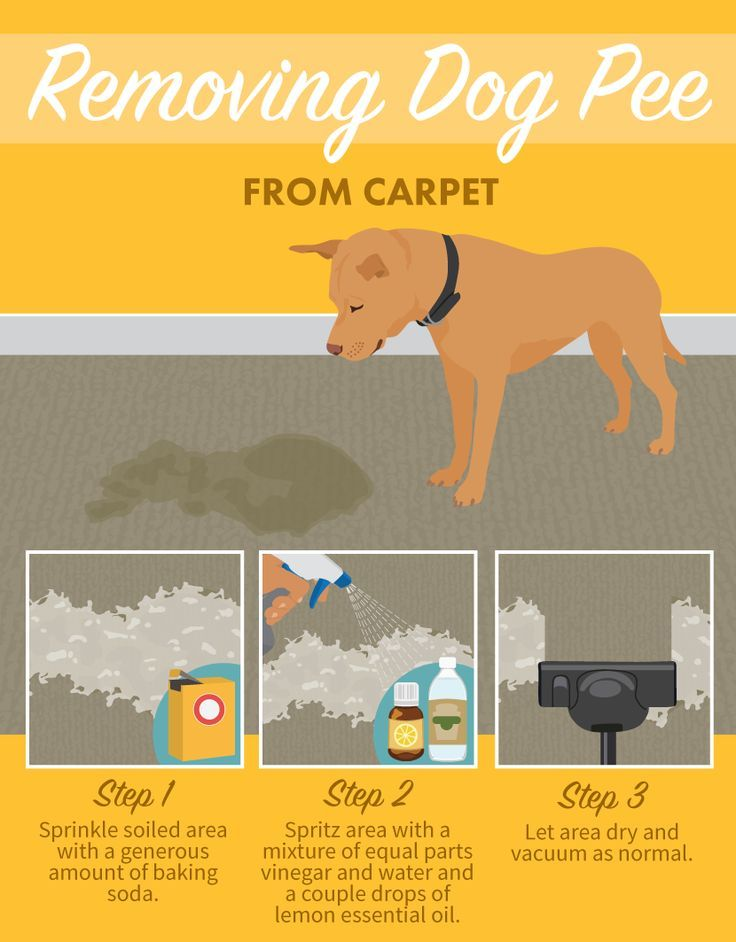 Dog Urine Carpet Stain Removal Home Remedy