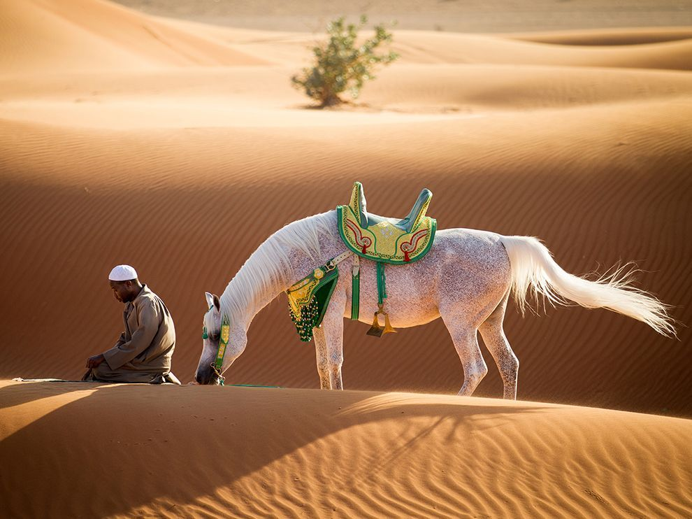 Photo of the Day White horses, Deserts and Horse