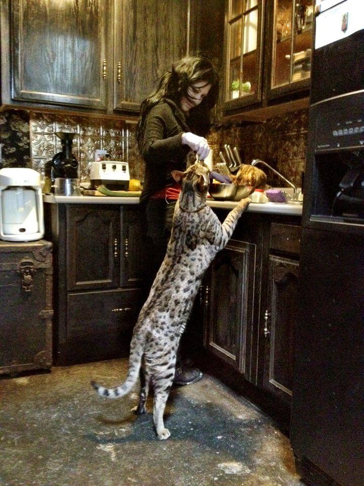 Savannah cat...big as a dog So Cute! Pinterest chats