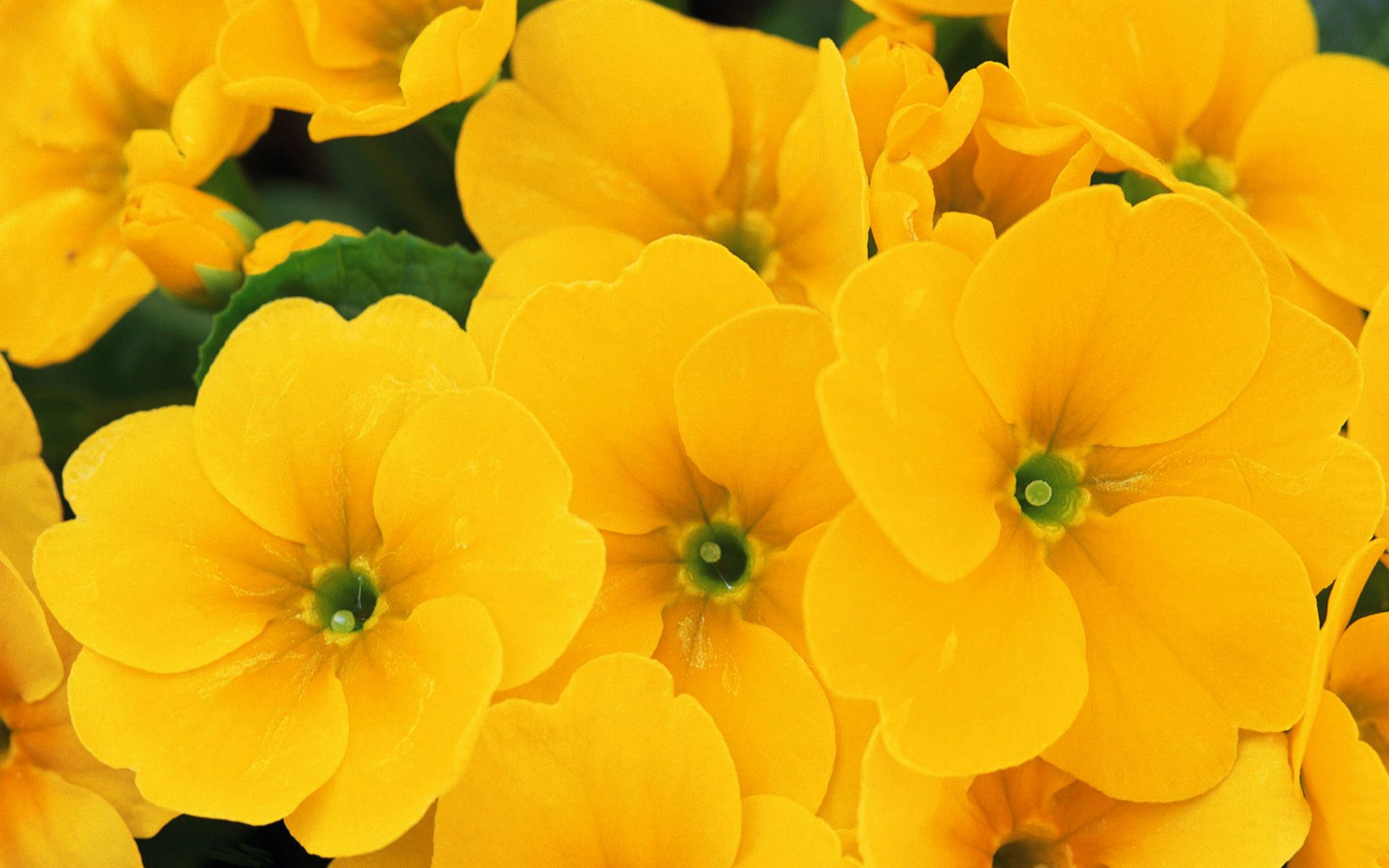 HD Yellow Flowers Wallpaper Download Free 97211