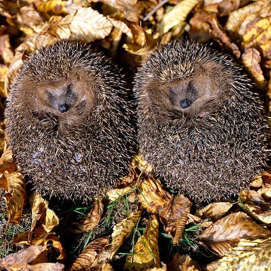 10 Hibernating Animals Climate Change Could Wake Up