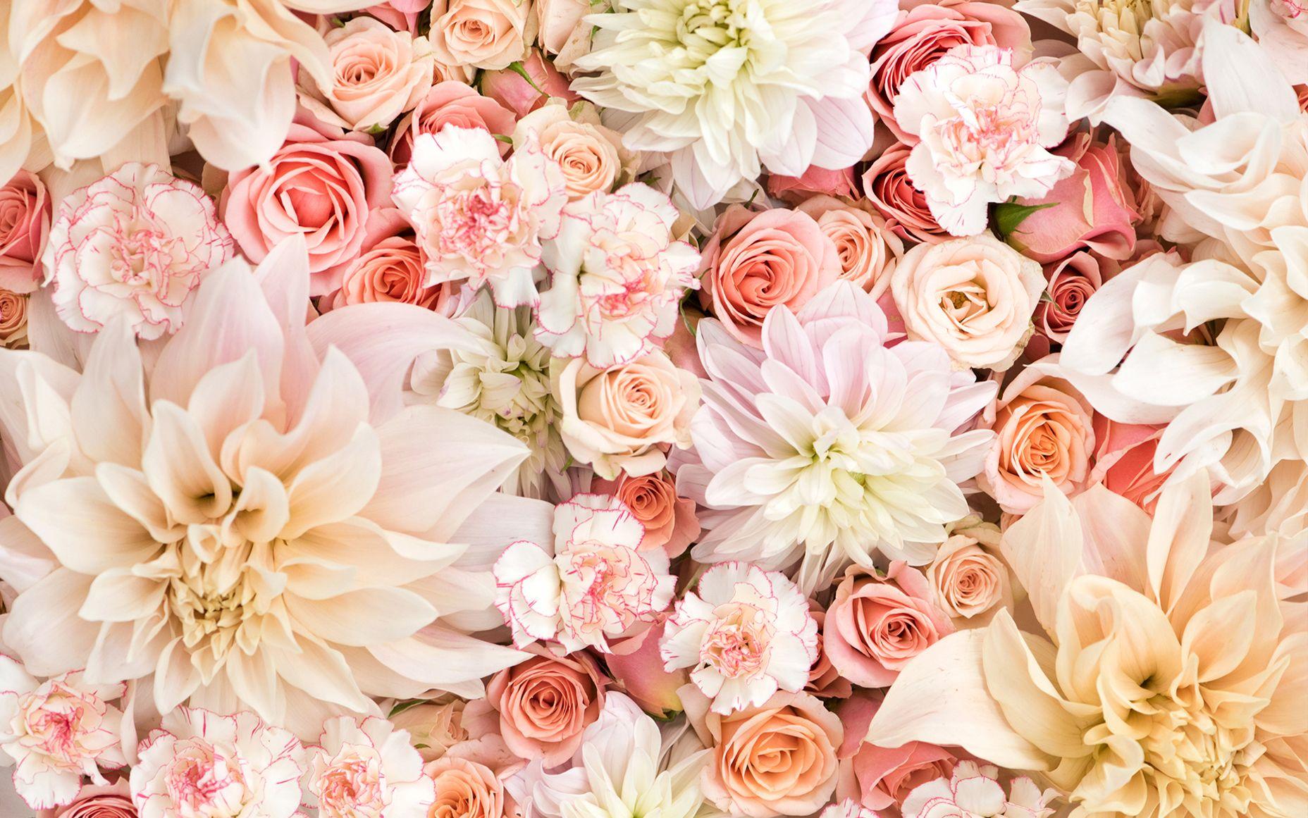Pink peach coral blush cream floral flowers blooms desktop