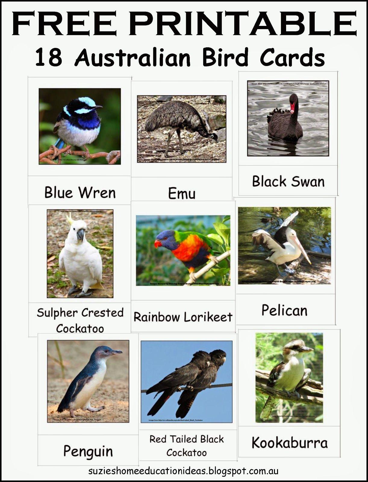 Handson learning about Australian Birds Australian