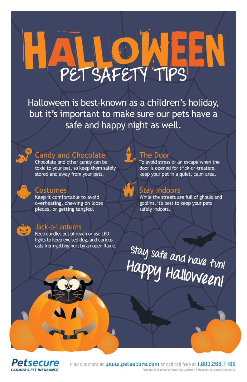 Halloween Pet Safety Tips from Petsecure Petsecure