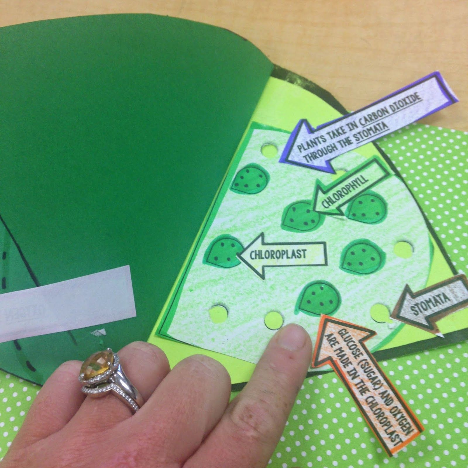 Photosynthesis Craftivity Students Visually Show The Process Of Photosynthesis And Explain It