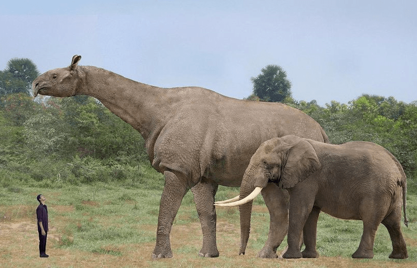 Baluchitherium, extinct. The largest land mammal that ever
