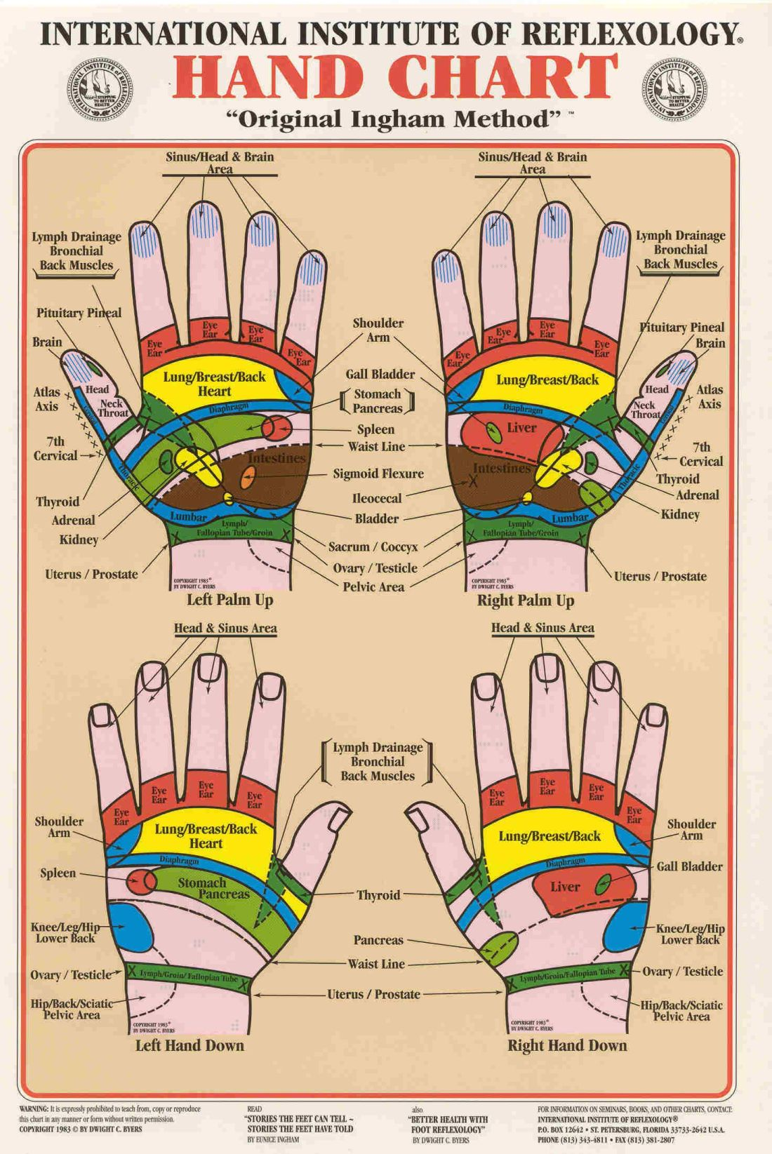 Hand reflexology this has front and back of hand
