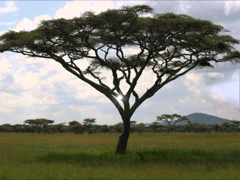 Savanna Grassland Biome Grasslands Pinterest Biomes
