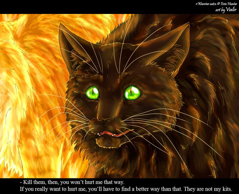 Hollyleaf Couldn't Handle It Warrior Cats Pinterest