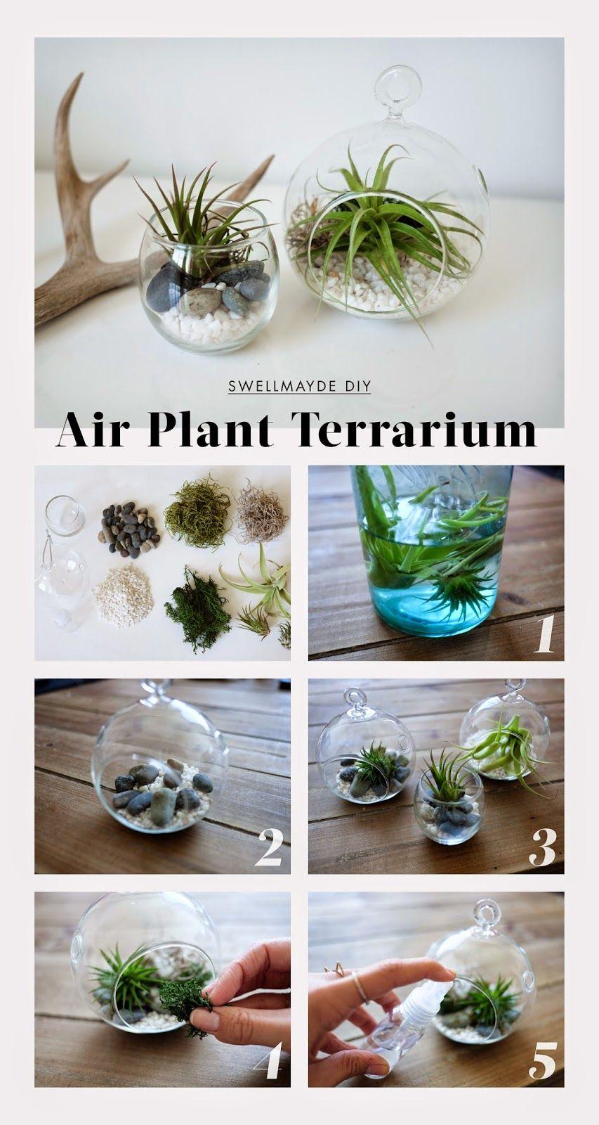 Air plant terrarium air plants terraria and plants