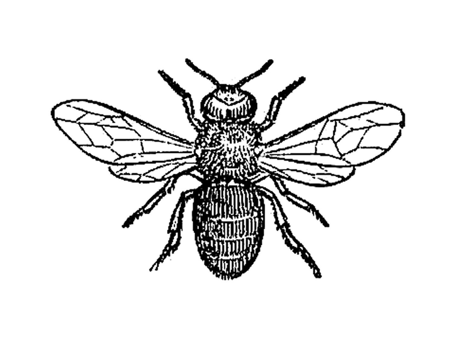 Antique Images Insect Clip Art Black And White