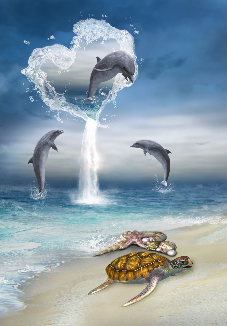 Dolphins dolphins Pinterest Dolphins, Ocean life and