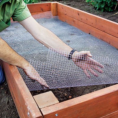 Perfectly made vege beds… worth taking the extra time with this attention to d