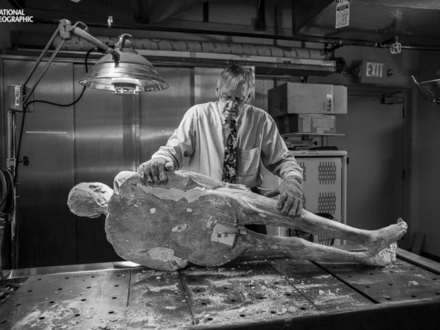 PHOTO: Vic Spitzer, director of the Center for Human Simulation, prepares to pry out a titanium rod from Potters hip replacement. Left in place, it might have destroyed the cutting blade.