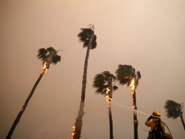 PHOTO: A firefighter sprays down palm trees as the Woolsey Fire burns in Malibu, Calif., Nov. 9, 2018.