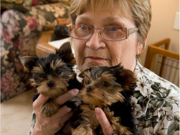 Teacup Michigan Puppies