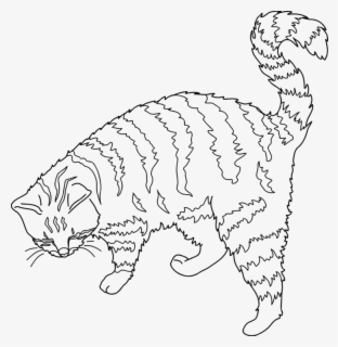Free Cat Outline Clip Art With No Background Clipartkey