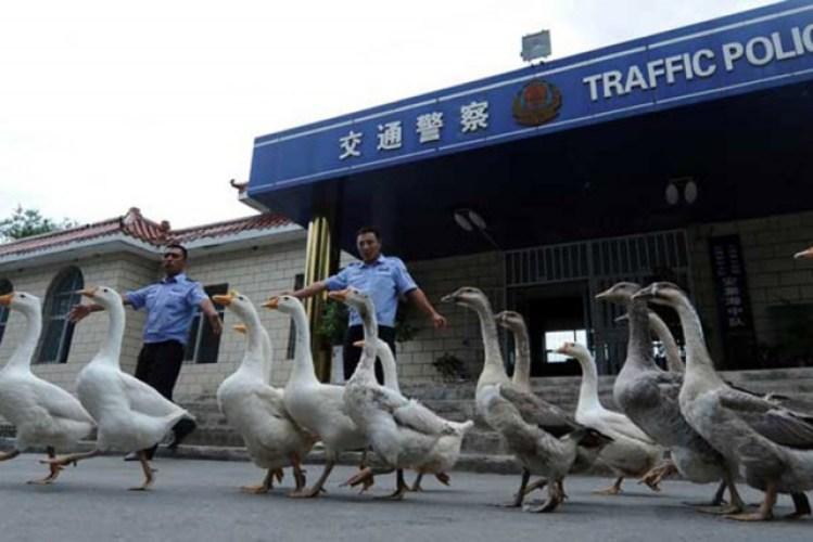Шокирующие факты о Китае интересное, китай, люди, факты