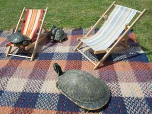 Tartarugas ganham toalha e miniespreguiçadeiras