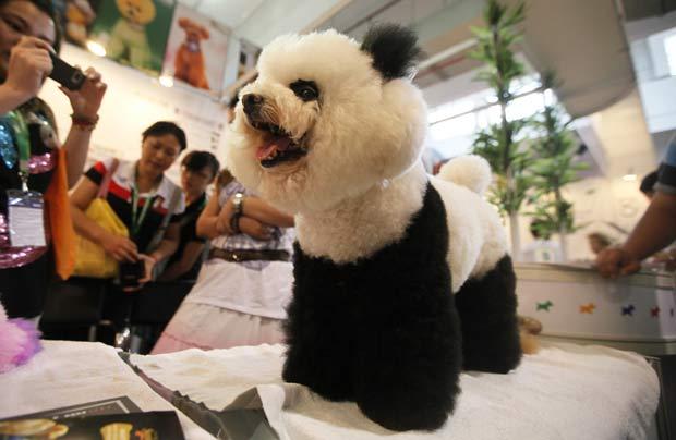 Um poodle teve seu pelo pintado para ficar parecido com um panda gigante. O cachorro foi exibido em uma feira de animais de estimação nesta sexta-feira em Xangai, na China.