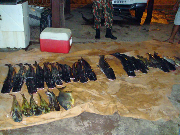 Peixes apreendidos pela Polícia Militar Ambiental em MS (Foto: Divulgação/PMA)