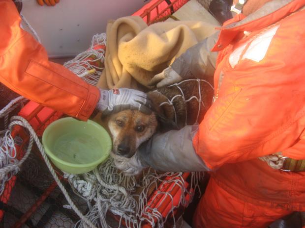 O animal foi avistado sobre o telhado da casa e depois caiu em um buraco, do qual foi resgatado. (Foto: AP)