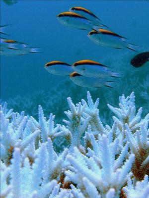 Um recife de corais, um dos exemplos de vida nos oceanos. (Foto: IPSO / via BBC)