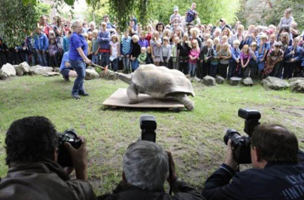 Pesagem foi realizada no zoológico de Amsterdã. (Foto: Lex van Lieshout/AFP)