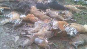 Morte de animais aconteceu na cidade de Zanesville. (Foto: BBC)