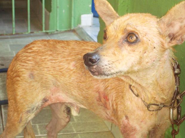 Cão arrastado na Paraíba é resgatado (Foto: Inaê Teles/G1)