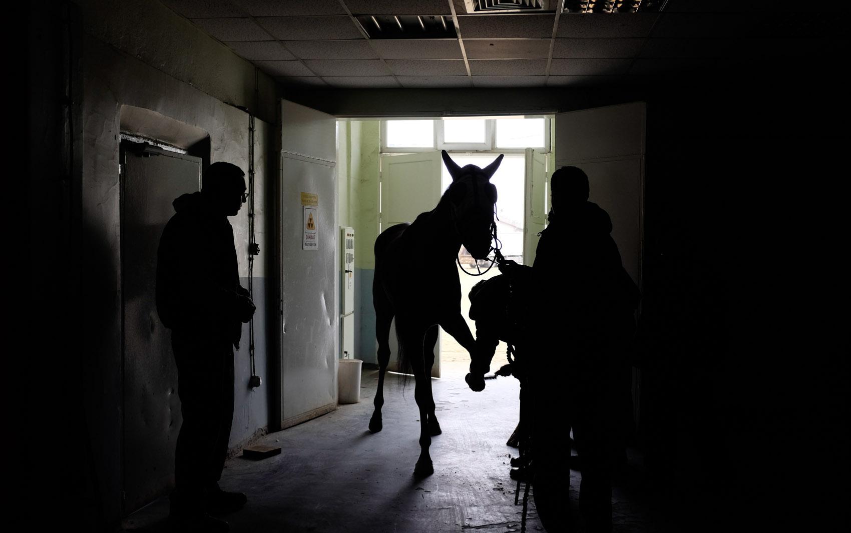 Cavalo de corrida aguarda antes de passar por exame de raio-x no hospital equino Veliefendi em Istambul