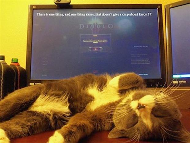 Esse gato deve ser o único que não dá a mínima para Diablo 3 fora do ar (Foto: IGN)