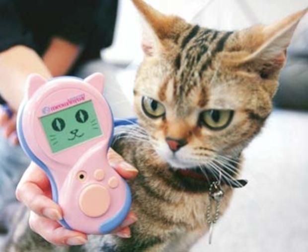 """Cat translator promete traduzir tudo o que seu gato está """"miando"""" (Foto: Reprodução/Brandwatch)"""