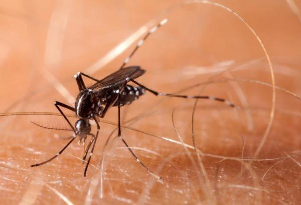 Darien mosquito tests positive for EEE; School district informs parents, will modify schedule