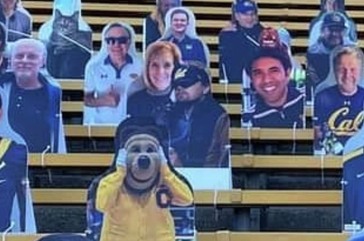 Cardboard cutouts from the 2020 Big Game between Cal and Stanford, including an image of Leonardo DiCaprio in a Cal hat.