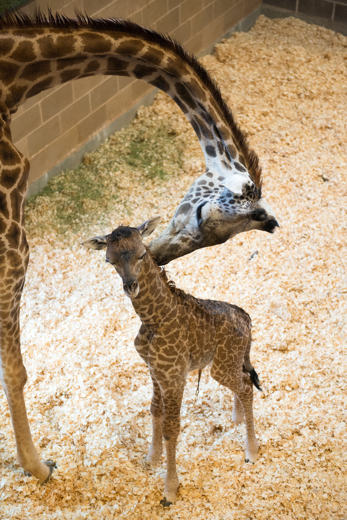 Zoo Light Houston