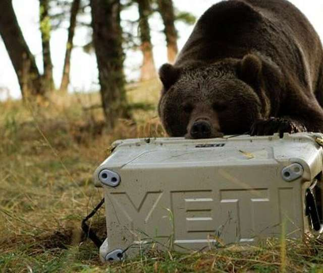 Facts About Yeti Coolers