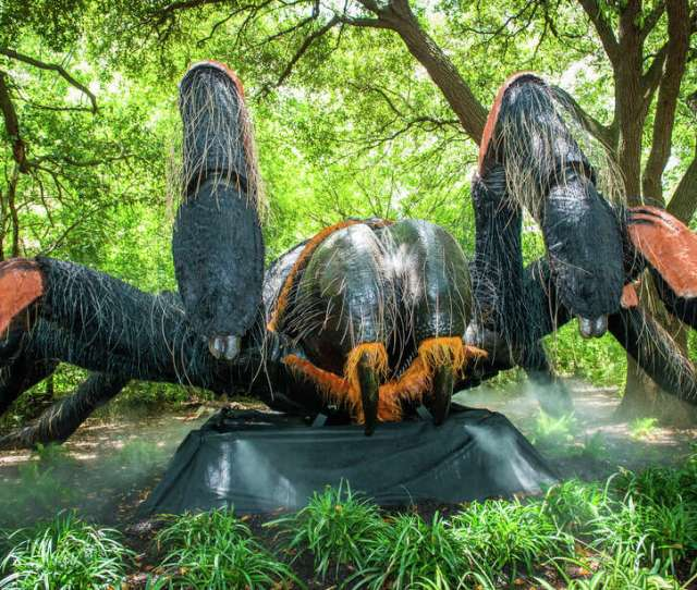 Big Bugs Come Back To The Houston Zoo