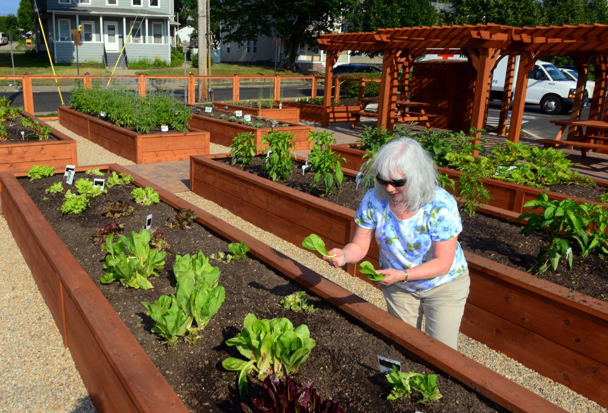 United Way S Community Gardens Fill Vacant Spots And