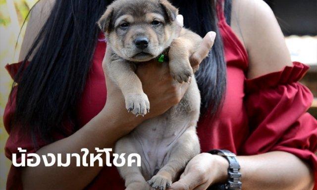 หมา 20 นิ้ว รอดตัวเดียวในคอก เจ้าของได้โชค 2 ตัวตรงๆ ตั้งแต่เกิด