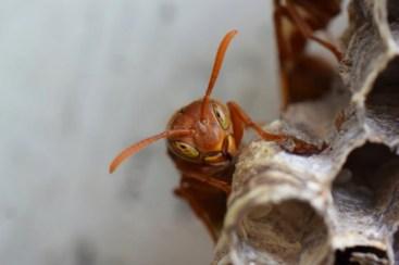 viespe in alertă - abhijeet bayani