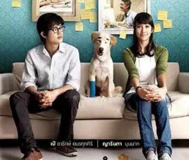 Paket Dvd Film Tentang Anjing Pecinta Anjing Mari Masuk