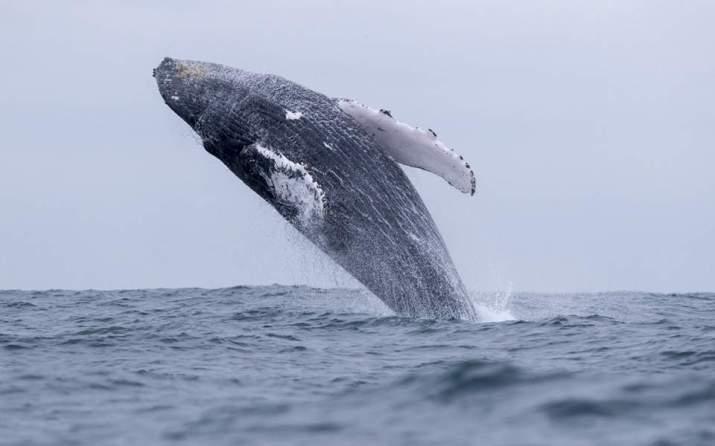 Τα τραγούδια της φάλαινας | Περιβάλλον | Η ΚΑΘΗΜΕΡΙΝΗ