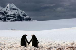 Το μυστήριο της ακοής των πιγκουίνων