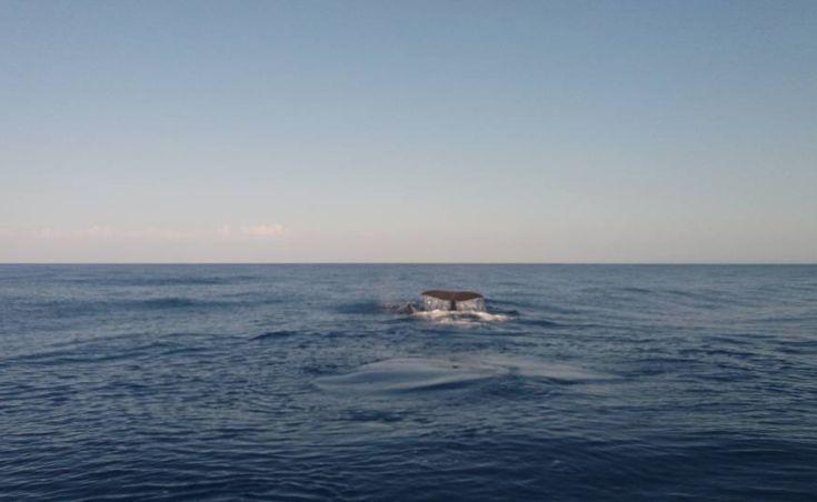 Φάλαινες ανοιχτά της Γαύδου καταγράφηκαν σε βίντεο