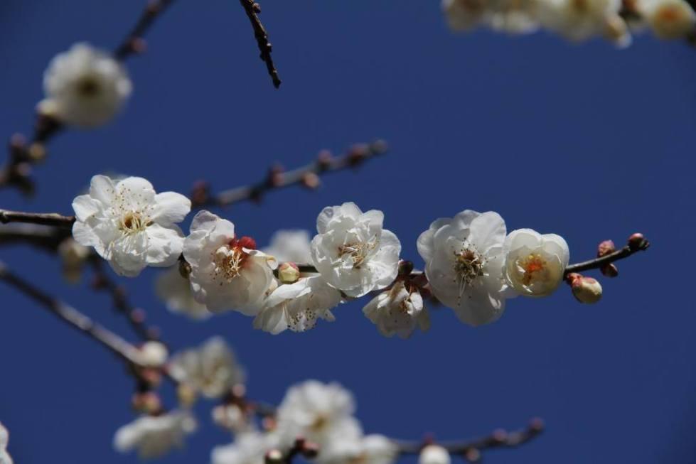 梅花盛開了!南部不可錯過7大賞梅景周末衝一波| 旅遊| 新頭殼Newtalk